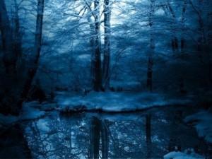 forest,landscape,photography,snow,blue-3ff2a054bb4b9f6d2add0e6dff7590d1_h